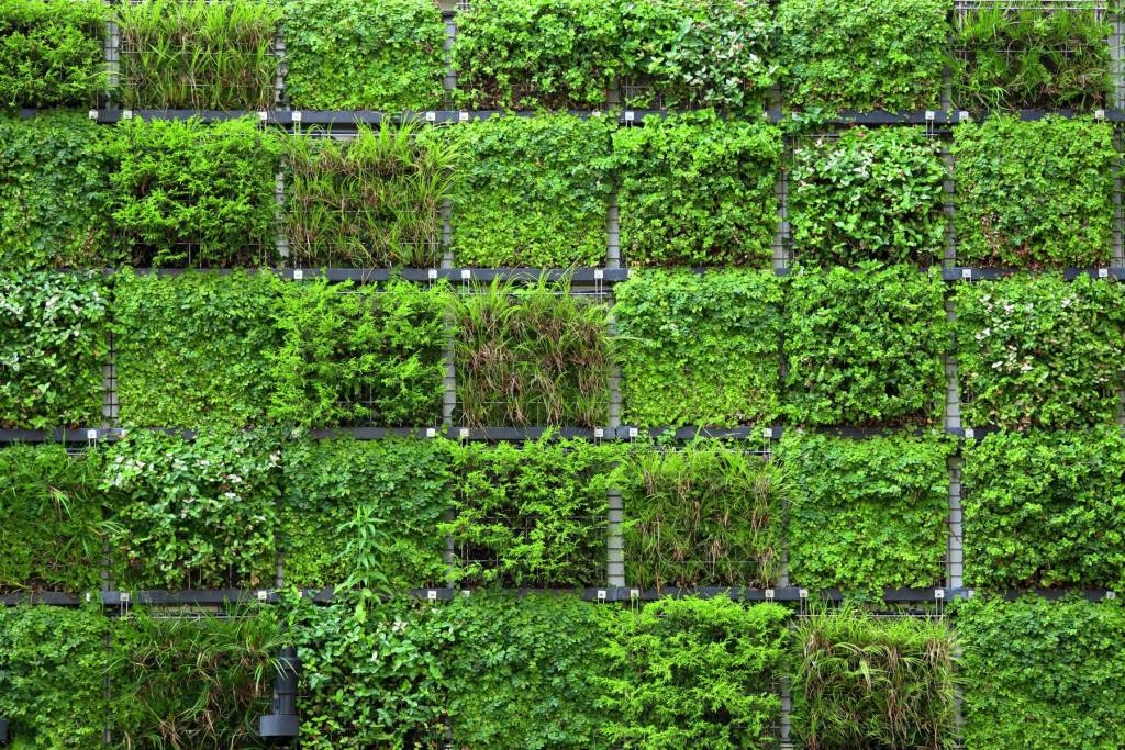 Bienfait des plantes pour environnement