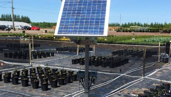 Projet irrigation de precision en pepiniere